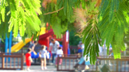 Stock Video Footage of The Tree and the blurry Playground