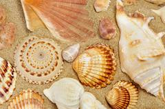 some seashells on the sand of a beach - stock photo