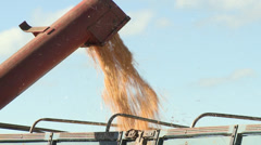 Loading corn into truck - stock footage