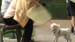 White Bichon Listening To Owner, Bench, Park, Outdoors Stock Footage