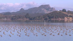 Oyster farm in a beautiful location Stock Footage