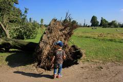 Dusseldorf , germany -  june 12: small boy near fallen tree blown over by hea Stock Photos