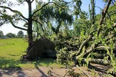 fallen tree blown over by heavy winds at the park - stock photo