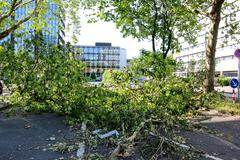 dusseldorf , germany -  june 12: fallen tree blown over by heavy winds on jun - stock photo