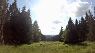Stock Video Footage of 4k summer meadow in Harz nature reserve