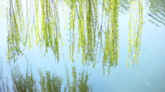 Weeping willow above the river - stock footage