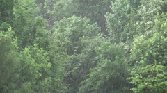 Ultra HD 4K Storm, Torrential Summer Rain Forest, Wood, Foliage, Rainy, Stormy Stock Footage