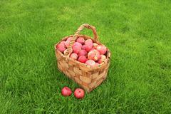 Crop of apples Stock Photos
