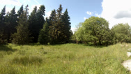 Stock Video Footage of 4k pan view landscape with meadow in Harz nature reserve