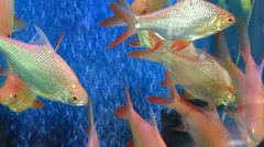 Fish in glass Stock Footage