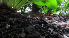 Secret Life in Garden Mulch Stock Footage