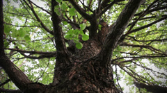 Trunk of tree Stock Footage