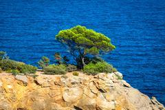cala nova beach in ibiza island in balearic mediterranean - stock photo