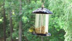 Finch On Feeder (4 of 5) Stock Footage