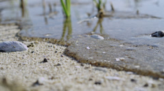 Ocean tide with sand and seashells macro Stock Footage