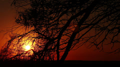Silhouette of a tree and sunrise Stock Footage