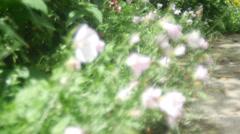 4k garden shot - stock footage