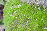 Stock Photo of moss and grass