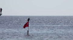 Osprey standing on the flag looks a boat passage, Sharm El Sheikh, Egypt Stock Footage