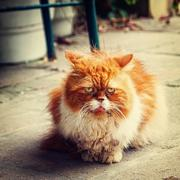 Vintage portrait of small kitty Stock Photos