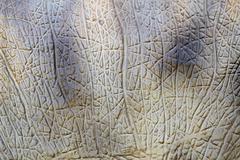 animal skin texture - stock photo
