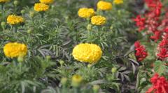 Flowers - Welcome To Kelowna Stock Footage