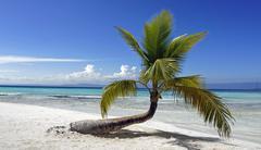 saona island - stock photo