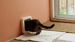 Cat exiting through microchip pet door in a wall. Stock Footage