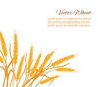 Wheat ear card. Stock Illustration