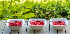 Panorama shot of three bowls of red currant Stock Photos