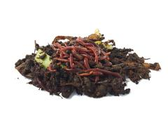 earthworms in compost - stock photo
