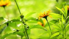 Summer flowers Stock Footage