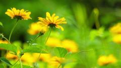 Summer flowers - stock footage
