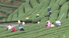 High-Mountain Tea Plantation Stock Footage