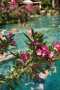 Pink oleander lines the edges of the pool Stock Photos
