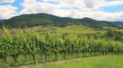 vineyard in Baden-Baden - stock footage