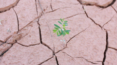 Tree growing on cracked earth, growing tree Stock Footage