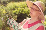 Woman take care of the garden Stock Photos