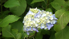 Close-up of flower. Stock Footage