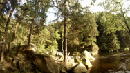 Stock Video Footage of 4k tilt motion rocky stream in Harz nature reserve