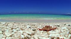 Starfish on tropical beach Stock Footage