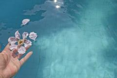 releasing flowers into the pool - stock photo