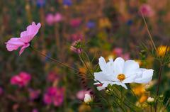Beautiful wildflowers blooming at spring time - stock photo