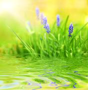 Purple flowers reflected in rendered water Stock Photos