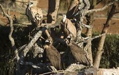 vultures group - stock photo