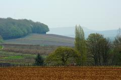 Hazy landscape with vineyards in champagne Stock Photos