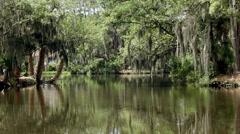 Pond resort spanish moss palm trees Stock Footage