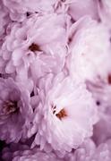 Fine art of close-up , flowers Stock Photos