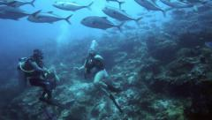 School of big eye trevally swimming closely together underwater Stock Footage