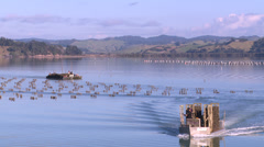 Oyster farm in coastal estuary harvest Stock Footage